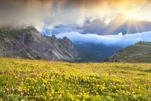 10.-Alpine-Meadow-with-Wildflowers-300x200
