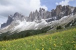 7.-Wildflowers-in-the-Dolomites-300x199